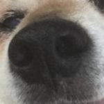 Profile photo of noks